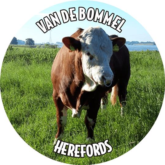 A J Kreun, Van de Bommel Herefords